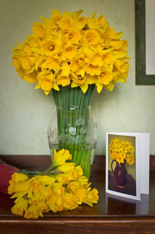 Daffodils by post