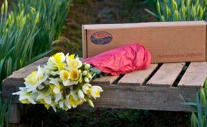 Online-Pembrokeshire-Daffodils